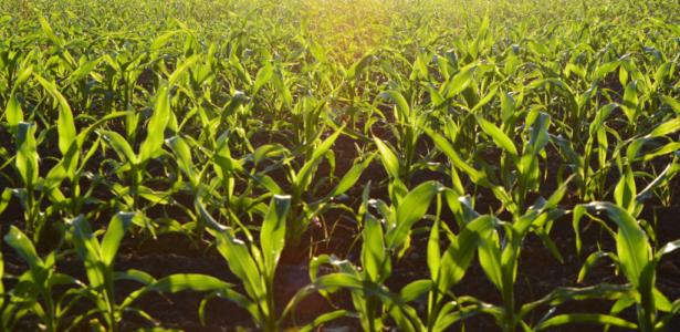 Curs online Introducció Agrohomeopatia